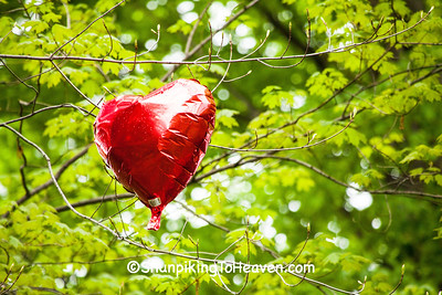 Red Heart Balloon, Cleveland, Ohio