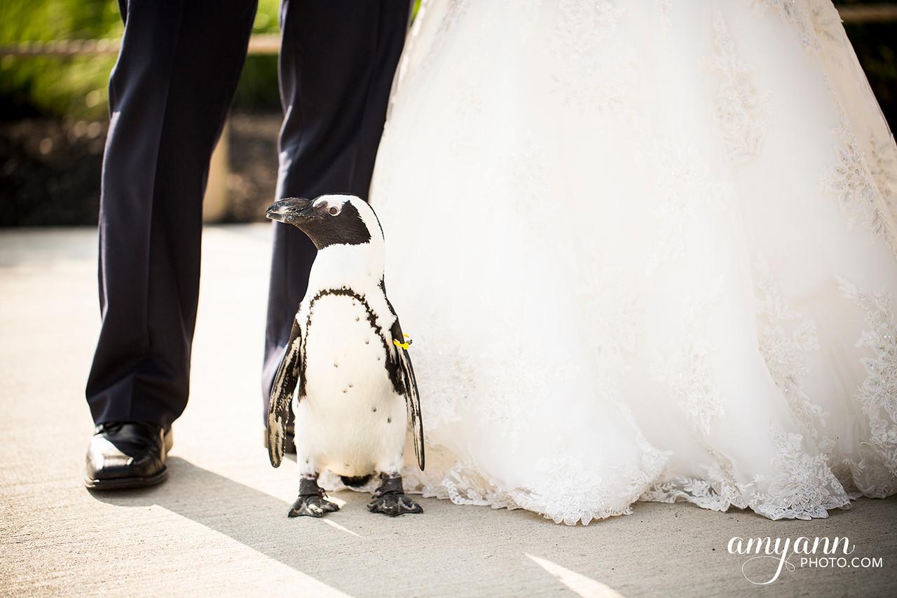victoriaevan_weddingblog080