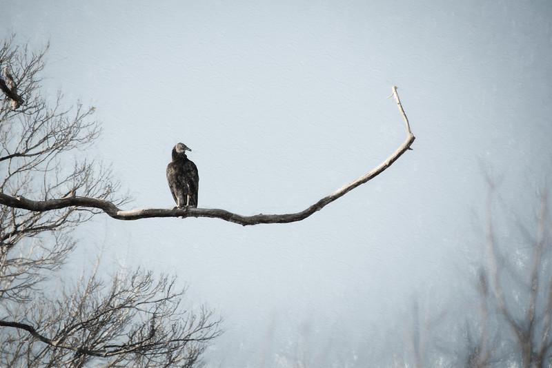 At Great Falls, Virginia