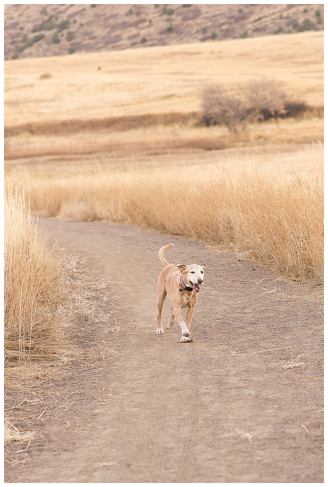 Littleton Colorado Family and Pet Photography-3