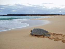 turtle seeking the ocean