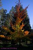 SierrasFall2011_KwaiLam-4581