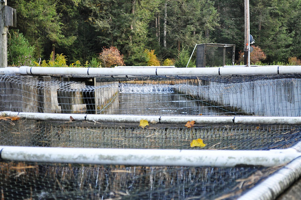 Blooming Grove Fish Hatchery, Old and New Fall 2012