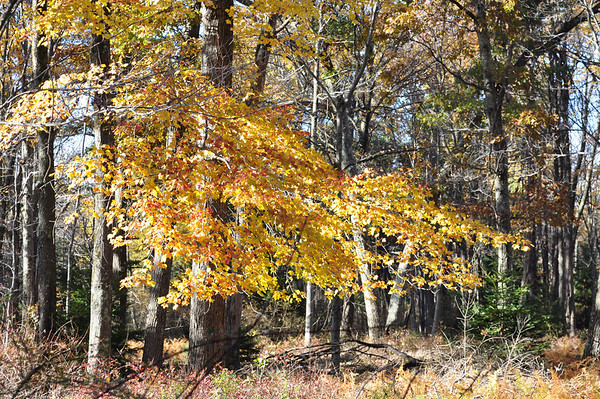 Blooming Grove PA, Fall 2012
