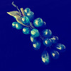 Blue Glass Grapes