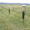 Sky Meadows bluebird trail monitoring project.
