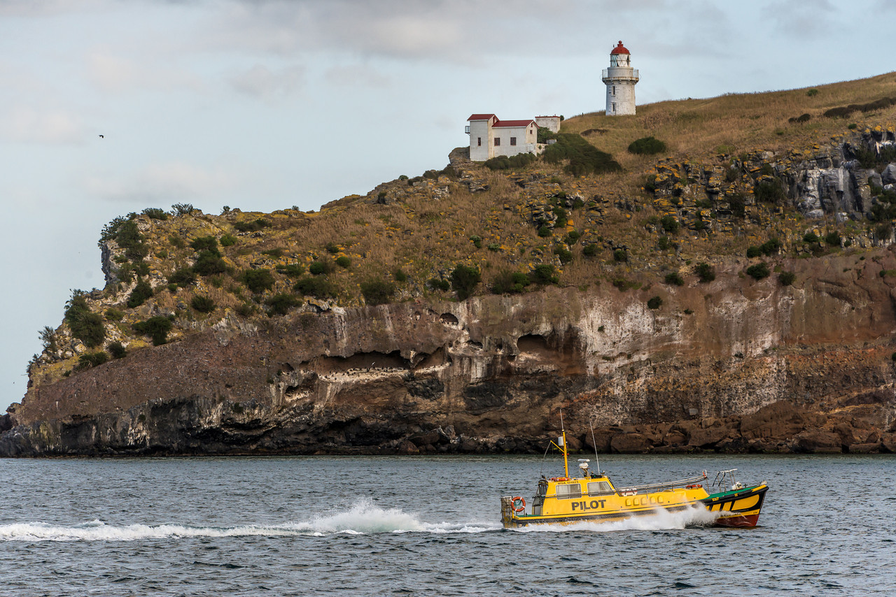 The Otago Harbour Pilot sails past Aramoana mole, in front of the Taiaroa Head lighthouse