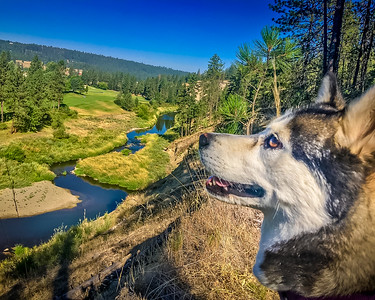 Brook Pup