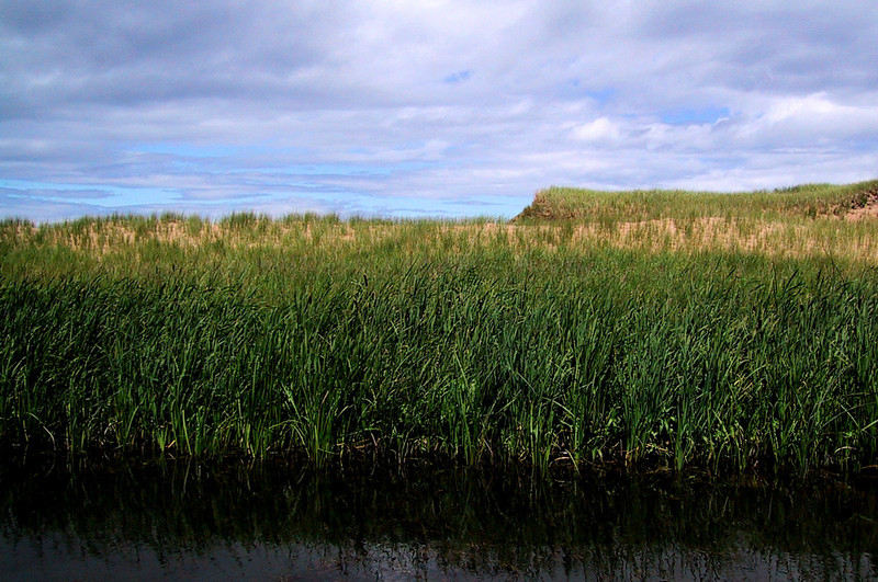 Marsh lands, Cavendish, PEI