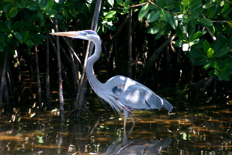 Egret or Heron?