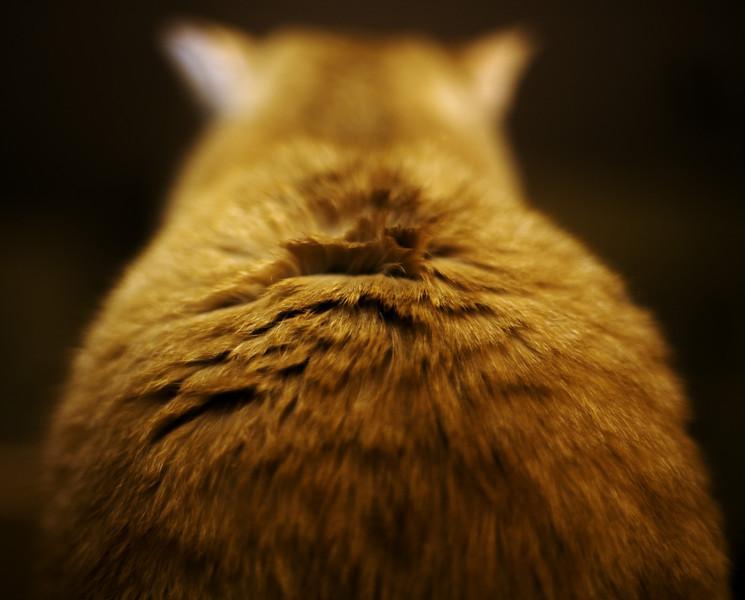Da Cat