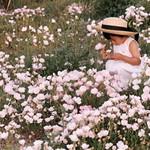 roseprimroses99.jpg