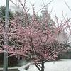 Snow! III