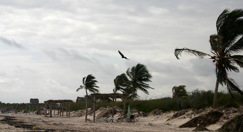 Windy, Cayo Coco