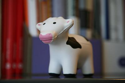 Lipstick on Cow