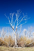 Bare white tree branches reaching up against blue sky in one of the burn regions of southern California.