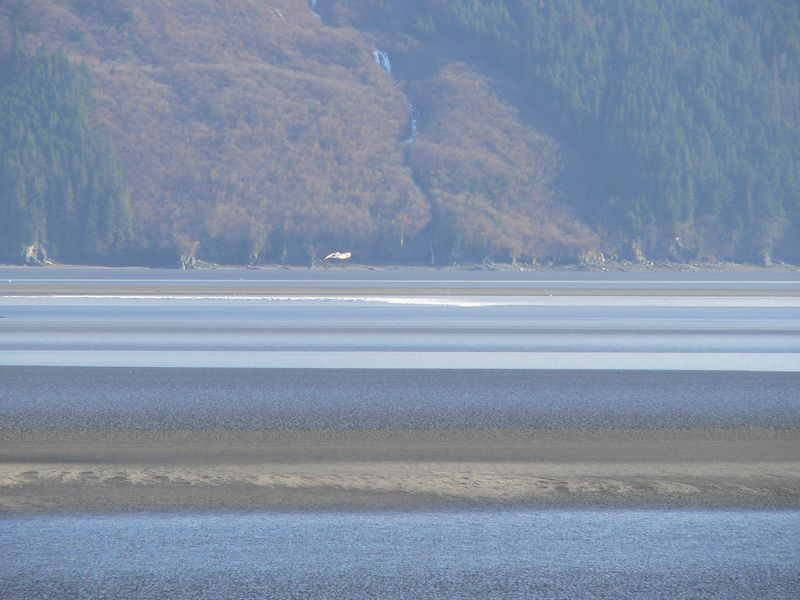 Bore tide in the distance rolling down the far side of the Arm a few minutes before reaching the Seward Highway side.