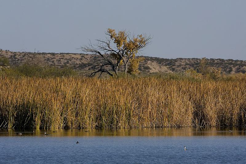 Bosque Marsh Pond
