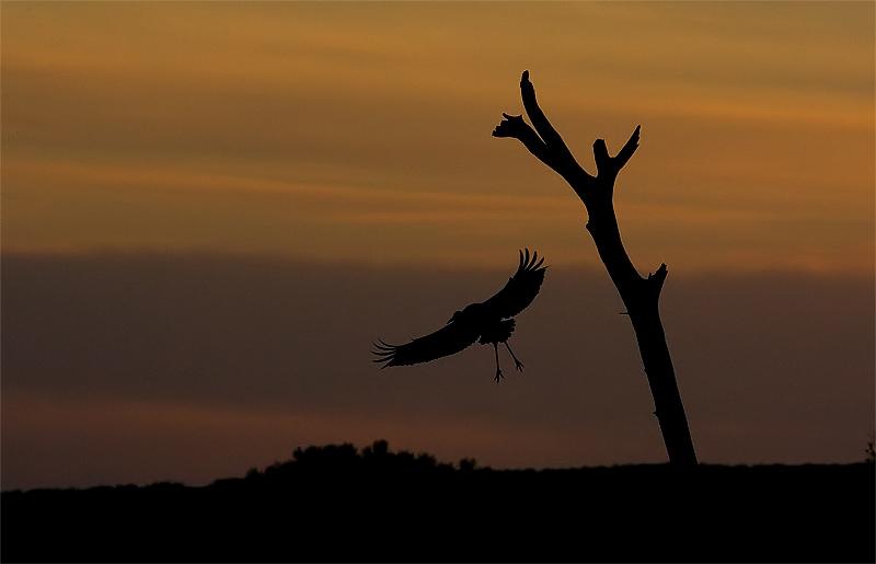 Bosque sunset