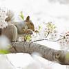 Squirrel Eating Flower