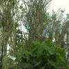 Moss Forests Mt Takaniata
