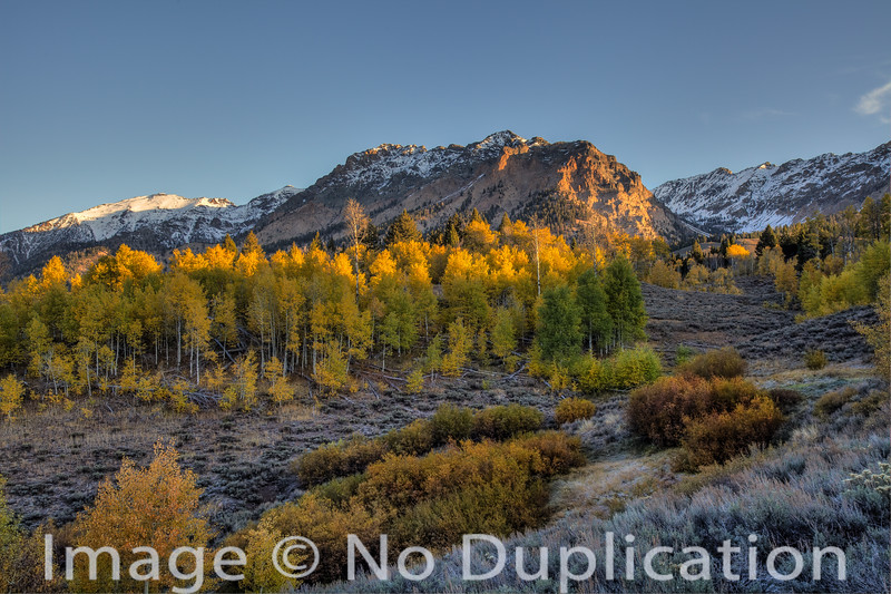 Fall colors, Boulder Mountains, Idaho