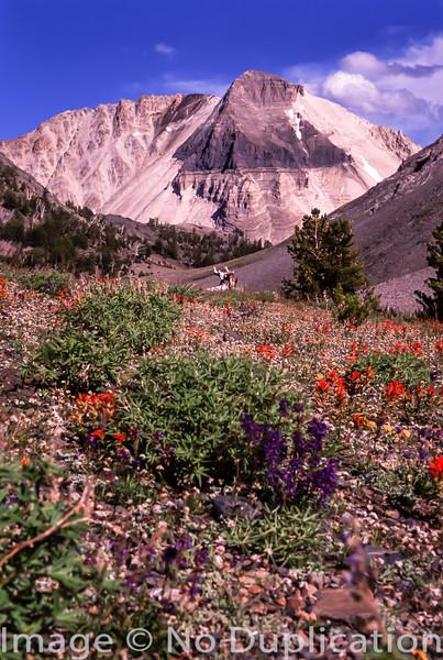 O'Calkins Peak, White Cloud Mountains, Idaho