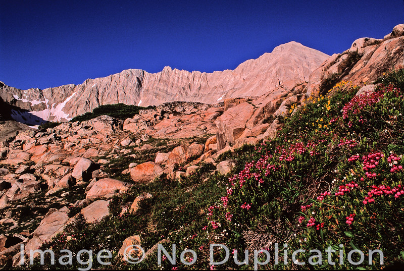 Alpine heather and D.O. Lee Peak, White Cloud Mountains, Idaho