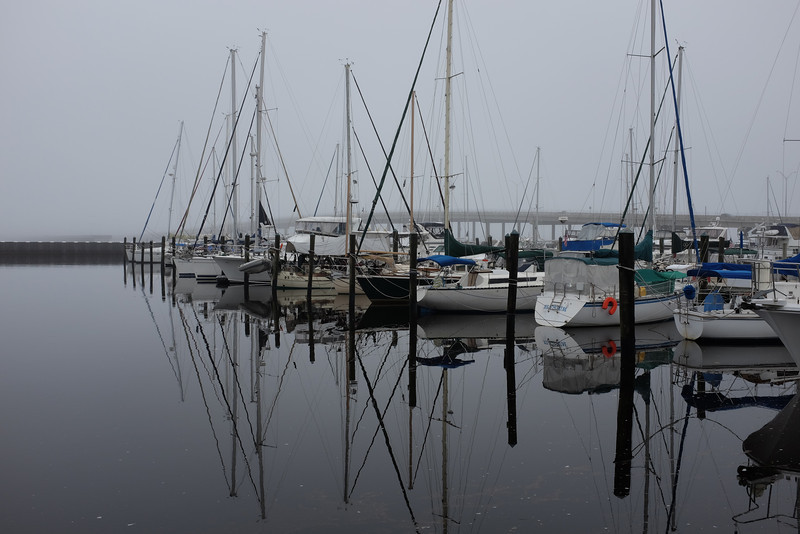 Foggy Marina Morning