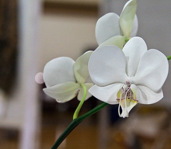 A perfectly Craved and painted Orchid