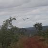 Macaws at Emas