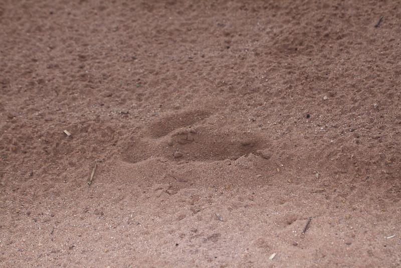 Rhea footprint