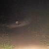 southern naked tail armadillo