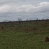 Termite mounds at Emas Np