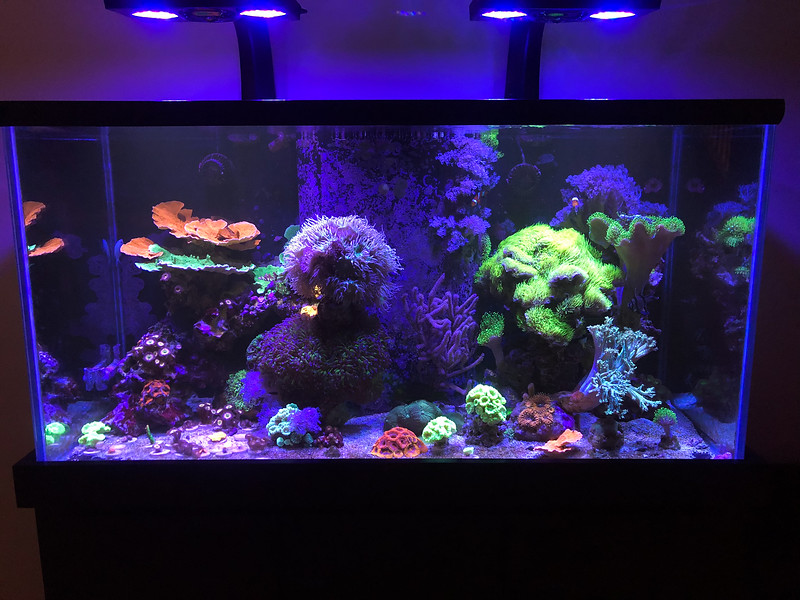 Main Tank-not for sale or lighting