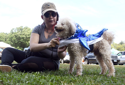 9/2/2017 Mike Orazzi | Staff Miranda Bishop adjusts a shark costume on Benji during the third annual Bow Wow Bark in the Park Saturday at Rockwell Park to raise awareness and donations for pit bulls and shelter animals.