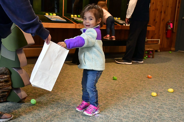 4/19/2019 Mike Orazzi | Staff Victoria Salguero, 2 1/2, during the annual egg hunt at the Harry C Barnes Memorial Nature Center in Bristol on Friday morning.