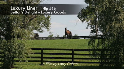 # 566  Luxury Liner