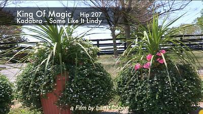 # 207  King Of Magic