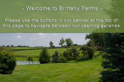 Brittany Intro Page