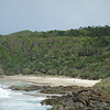 Littoral rainforest at Kings Beach. Broken Head Nature Reserve, New South Wales.