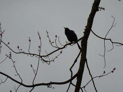 brookside heron mar 24 2013