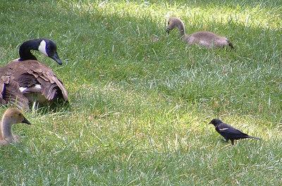 brookside visit June 20,2006