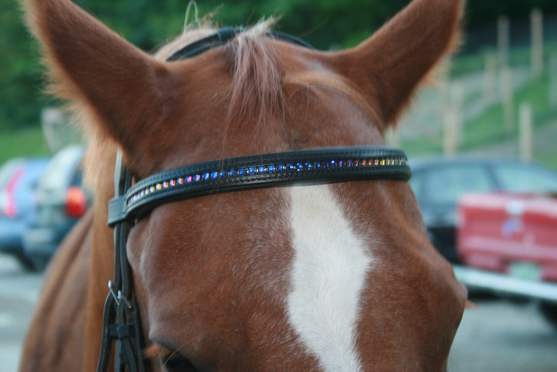 Modeling colorful Pink Equine Crystal Browband
