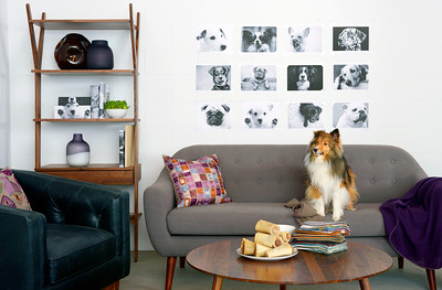 photographs of Bryght furniture with dogs by phtotographer nancy angermeyer