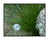 Bubble caught on the grass; there seems to be a bubble within the bubble; view the detail in the largest sizes
