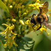 Thank You Dear Bee....