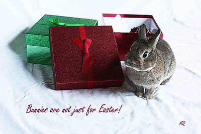 Bunny Christmas Card