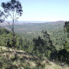 A view of the Bunya Mountain from our Pine Gorge walk