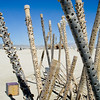 "Burning Man<br />  <a href=""http://www.burningman.com"">http://www.burningman.com</a>"